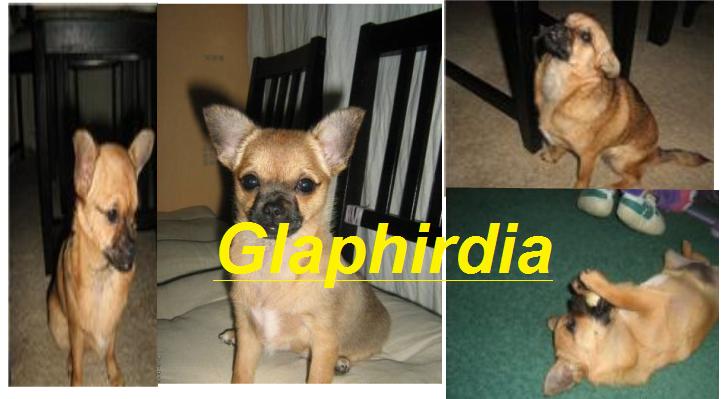 Глафирдия